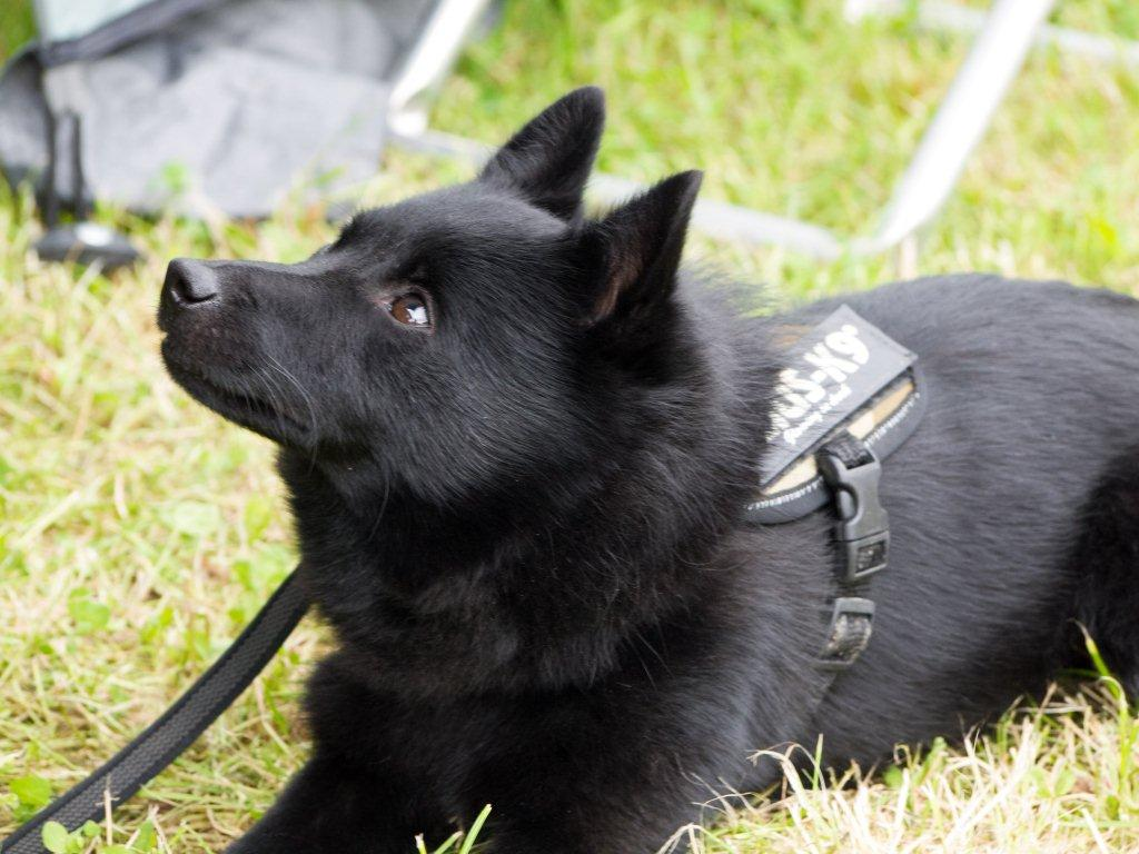 Loki - Juli 2012