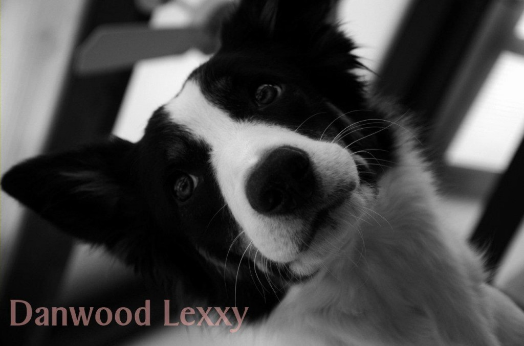 131215 Lexxy 2 SW