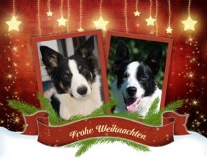 131215 Lexxy und Becks Frohe Weihnachten